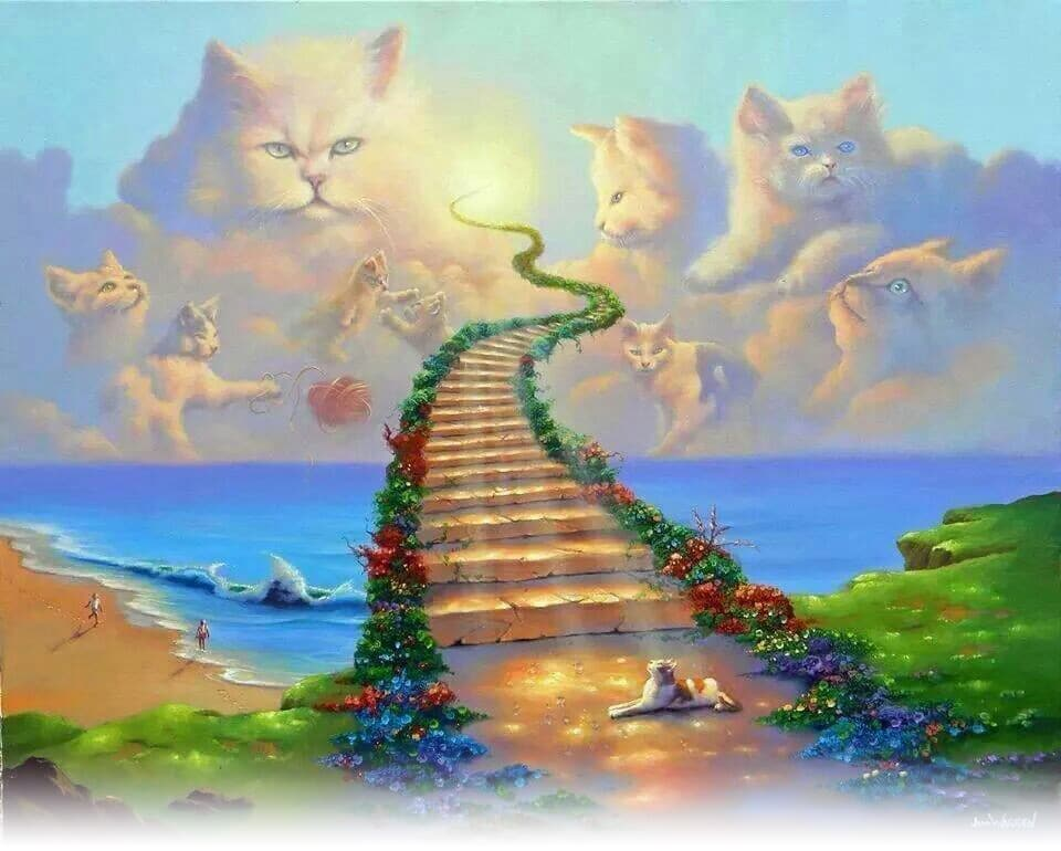 Cats in the Sky