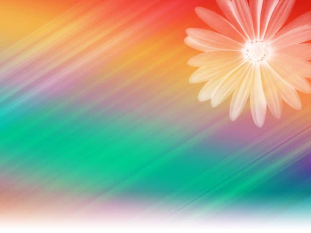 Rainbow Daisy