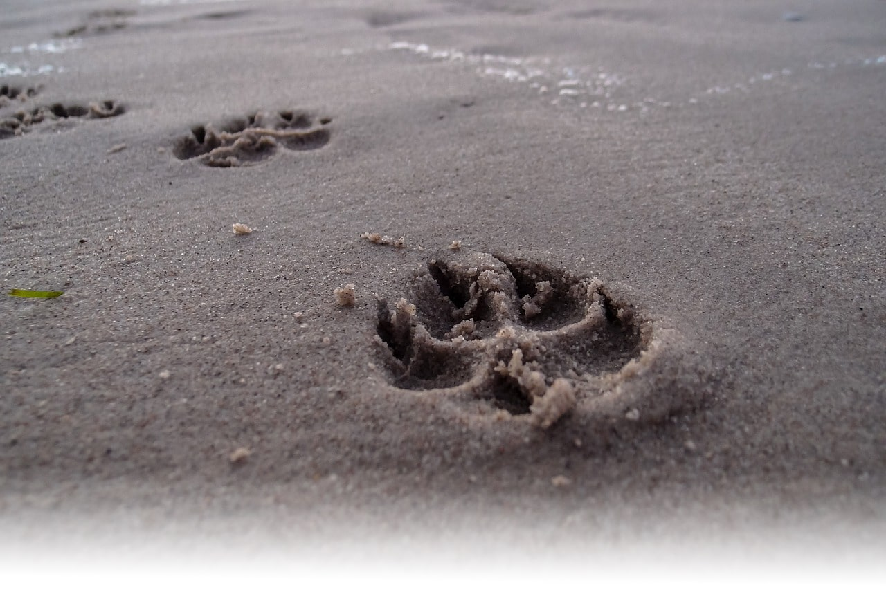 Paw in the Sand
